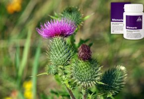 Milk Thistle Benefits